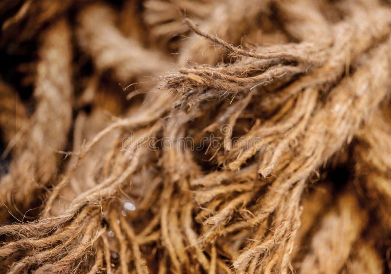 Horses parted hemp rope twine. Close-up stock image