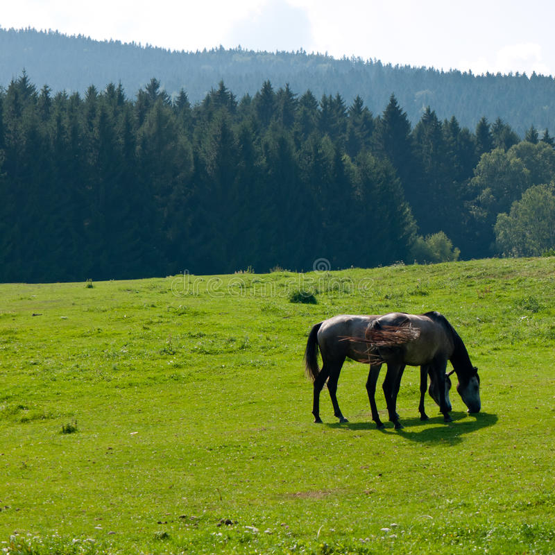 Download Horses on pasture stock image. Image of grassland, brown - 24050049