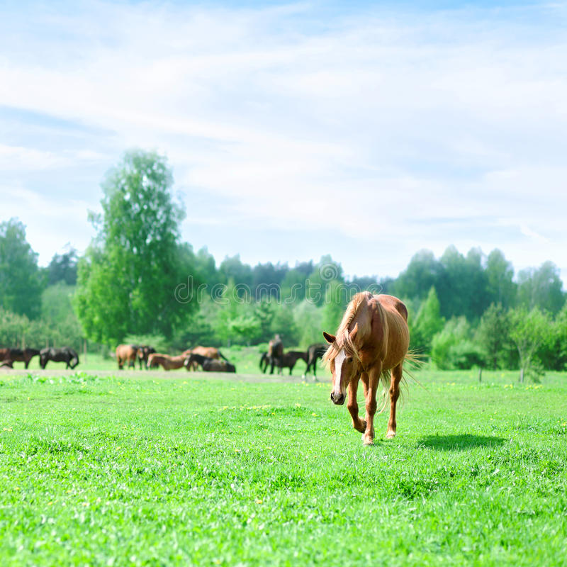 Download Horses on a pasture stock photo. Image of corral, horizon - 28238148