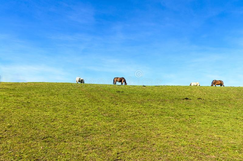 Horses on a pasture field stock photo