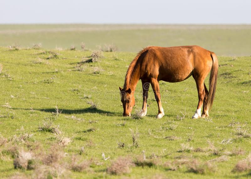 Horses in pasture on nature royalty free stock photos