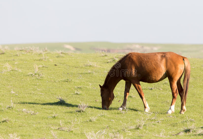 Horses in pasture on nature royalty free stock image