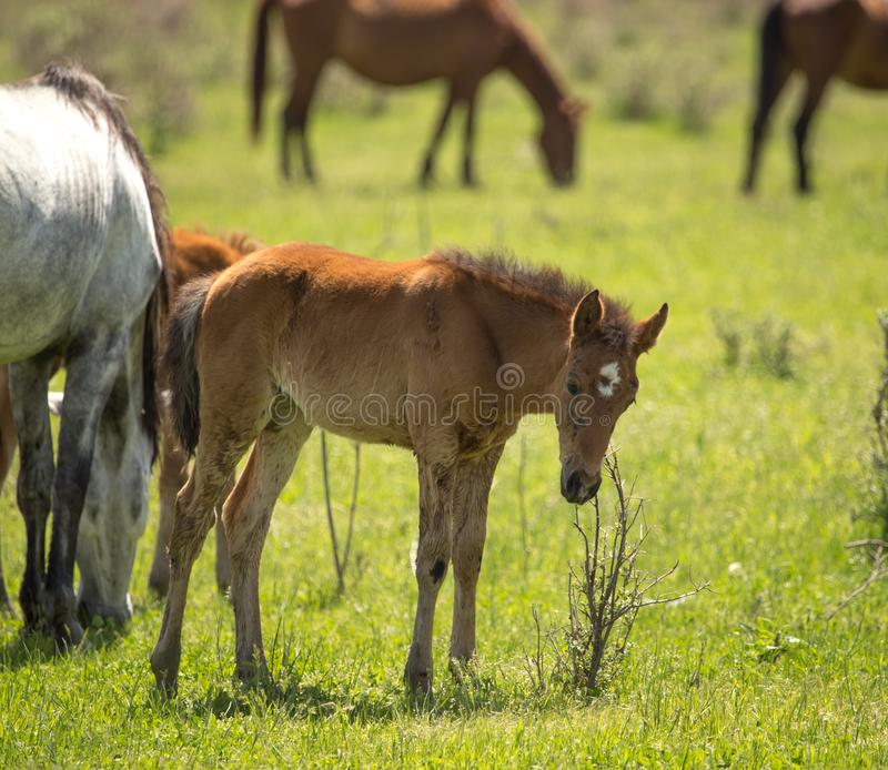 Horses in the pasture in the spring royalty free stock photos