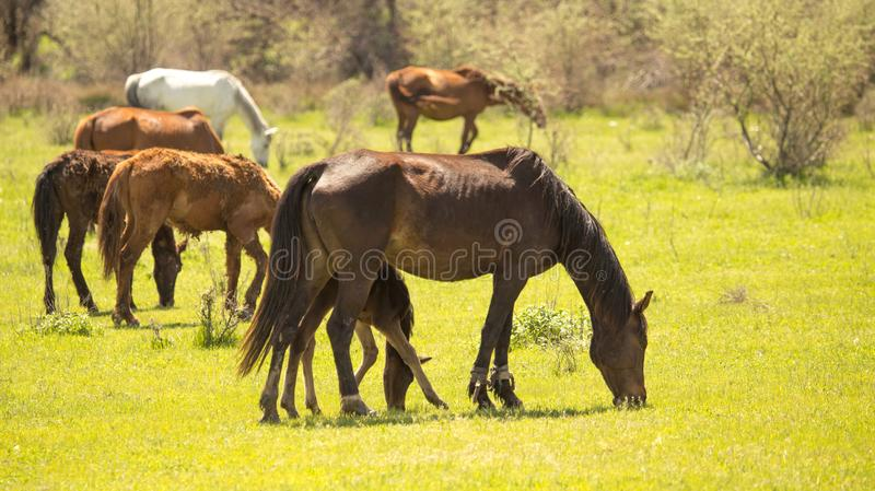 Horses in the pasture in the spring stock photos