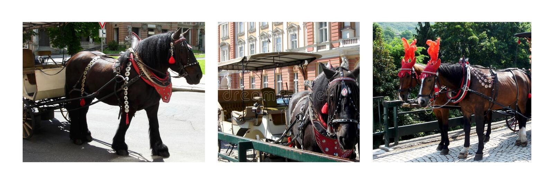 Download Horses photo collage stock photo. Image of promenade - 33464522