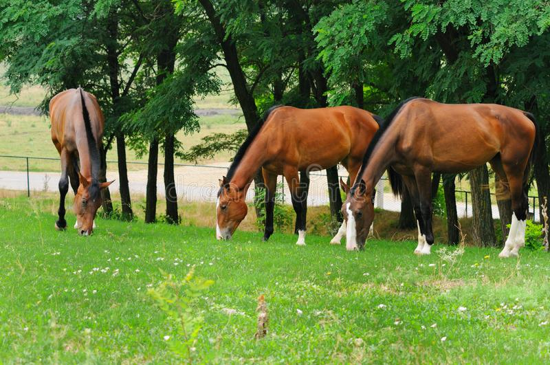Download Horses on the posture stock image. Image of freedom, ranch - 13777939