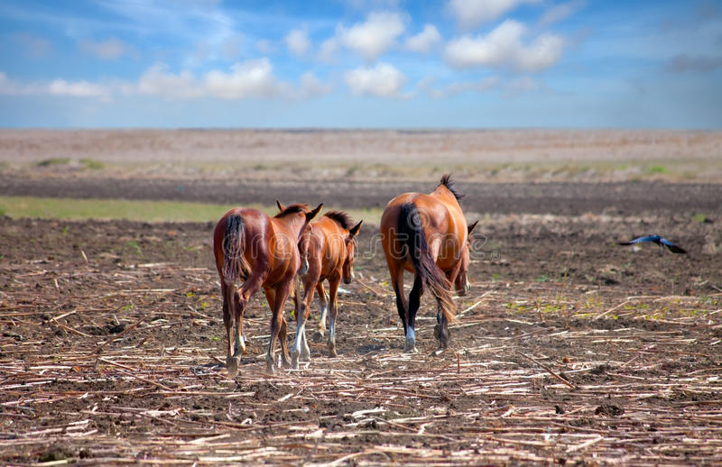 Download Horses on the Prairie stock photo. Image of earth, mammal - 28862908