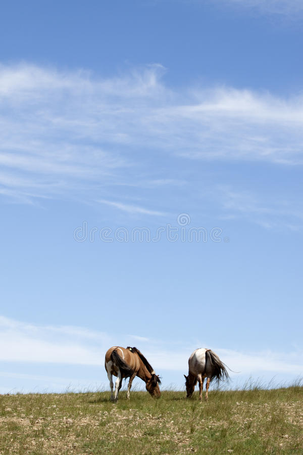 Horses in prairies stock photography