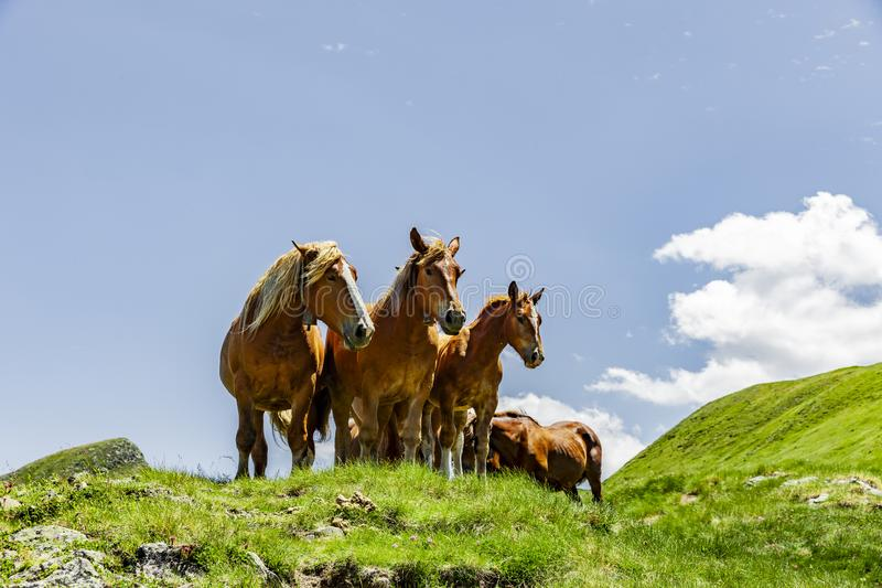 Horses in the Pyrenees in the summer royalty free stock photos