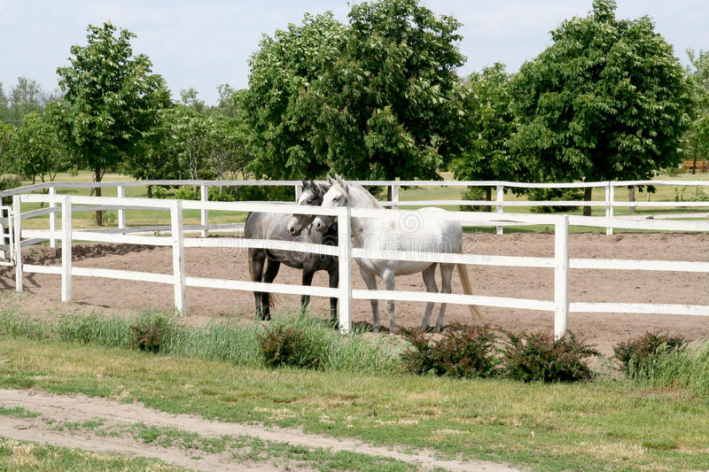 Download Horses on ranch stock photo. Image of satchel, rope, black - 13315044