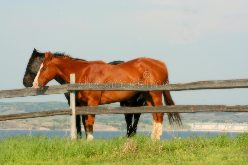 Image result for sunday summer afternoon horses