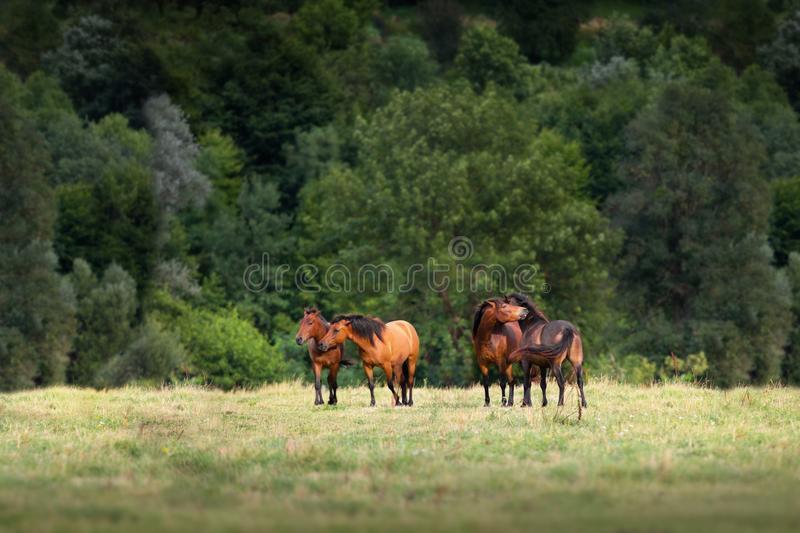 Horses rest on pasture royalty free stock image
