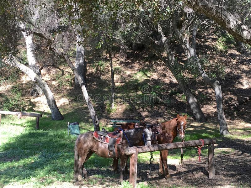 Horses resting on forest trail stock photo