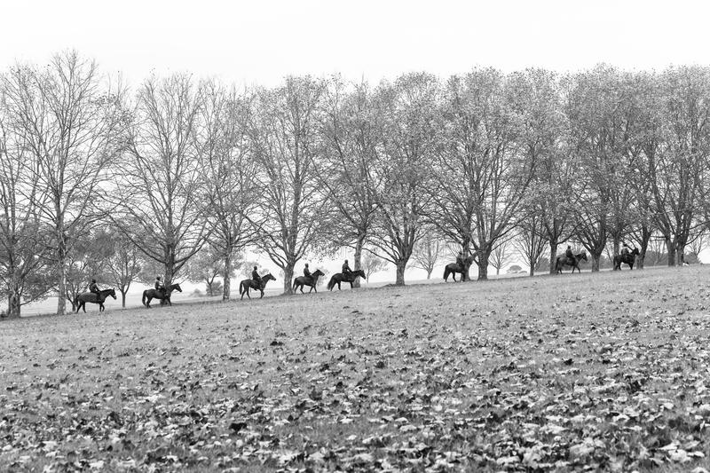 Horses Riders Fall Season Landscape. Autumn fall season race horses riders going to stables in scenic training landscape with trees dry leaves scattered on royalty free stock photos