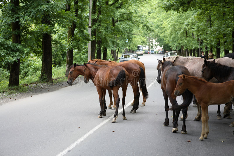 Horses on road stock images