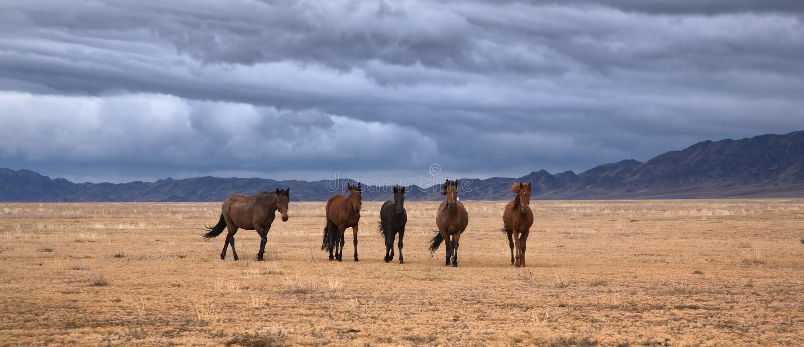 Horses roaming land. On cloudy day royalty free stock photo