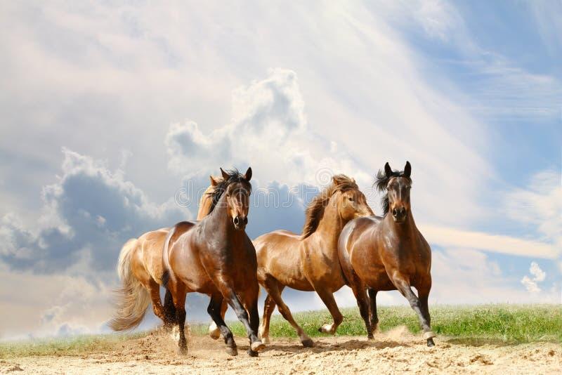 Horses run. Under cloudy sky stock photos