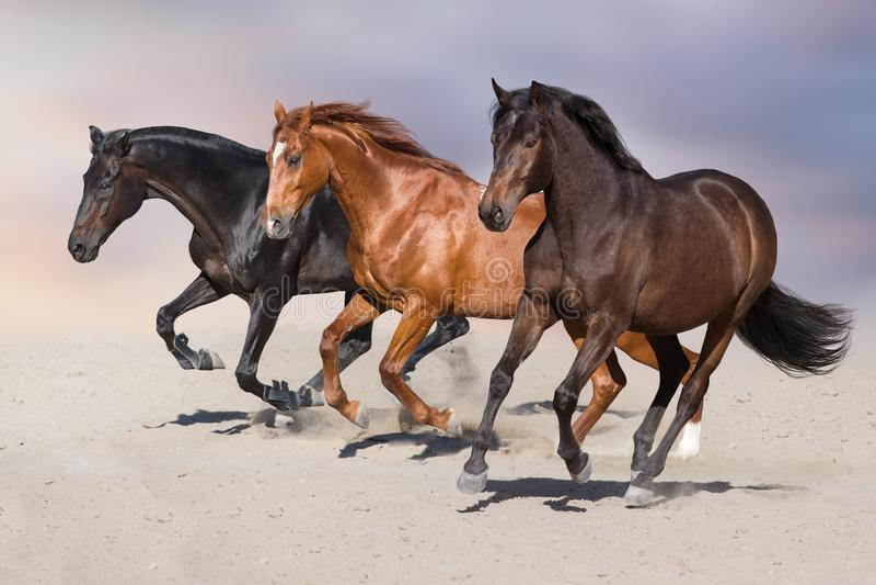 Horses run in desert. Horse herd run on sandy dust stock photos