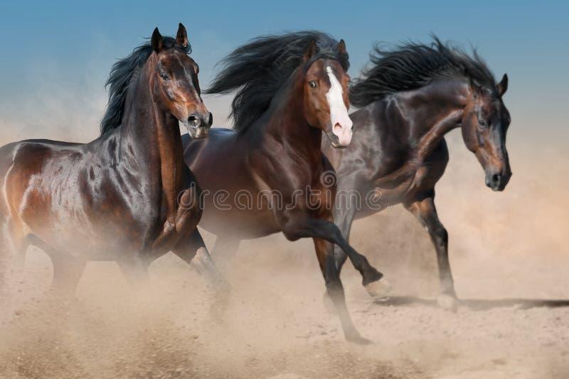 Horses run free. Horses run fast in desert dust royalty free stock photo