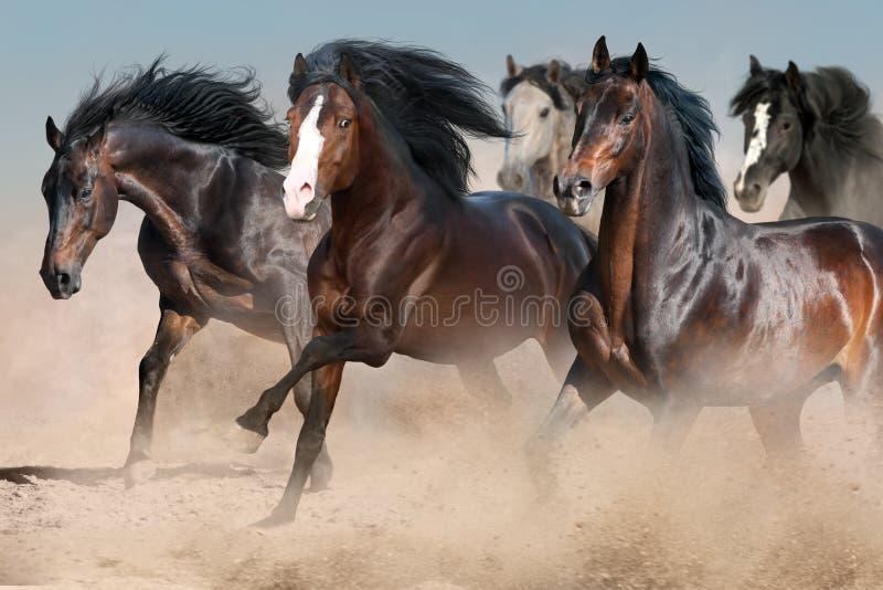 Horses run fast. In sandy dast royalty free stock photos