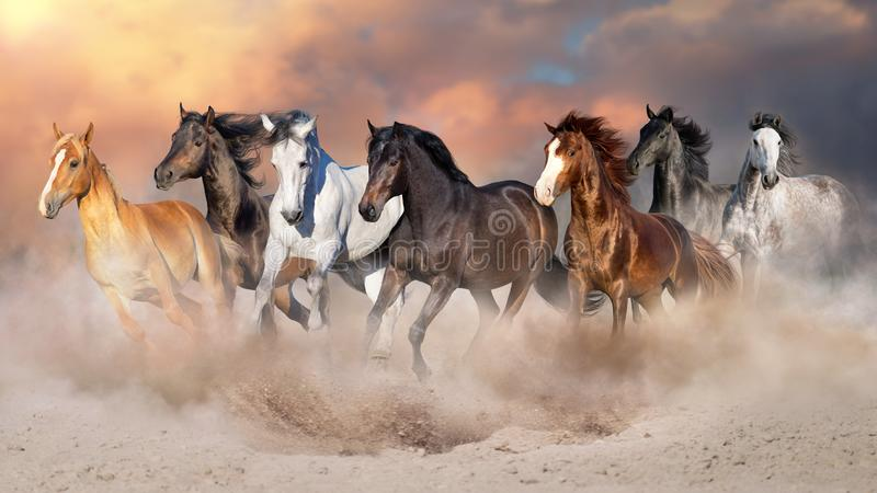 Horses run free stock photography