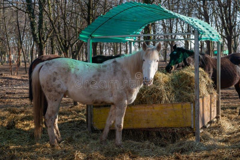 Horses run free. In the prairie stock photo