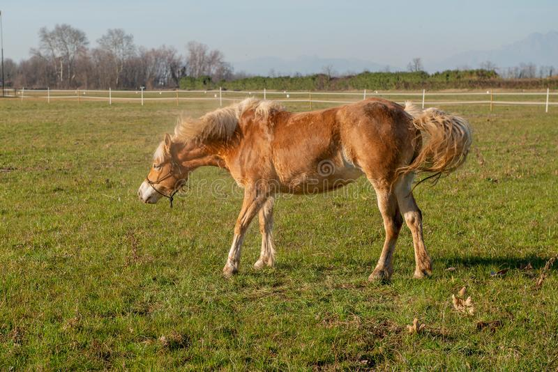 Horses run free. In the prairie royalty free stock images