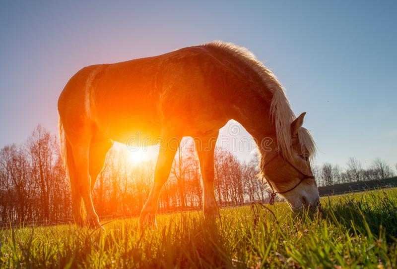 Horses run free. In the prairie stock images