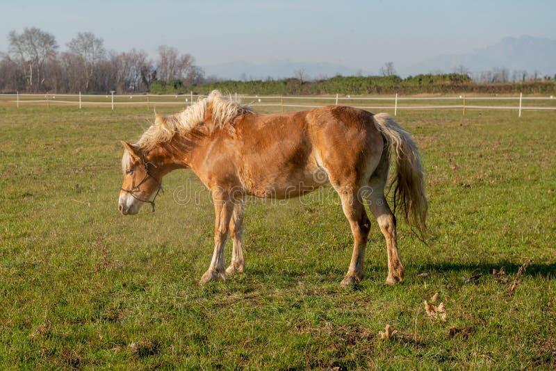 Horses run free. In the prairie royalty free stock photos