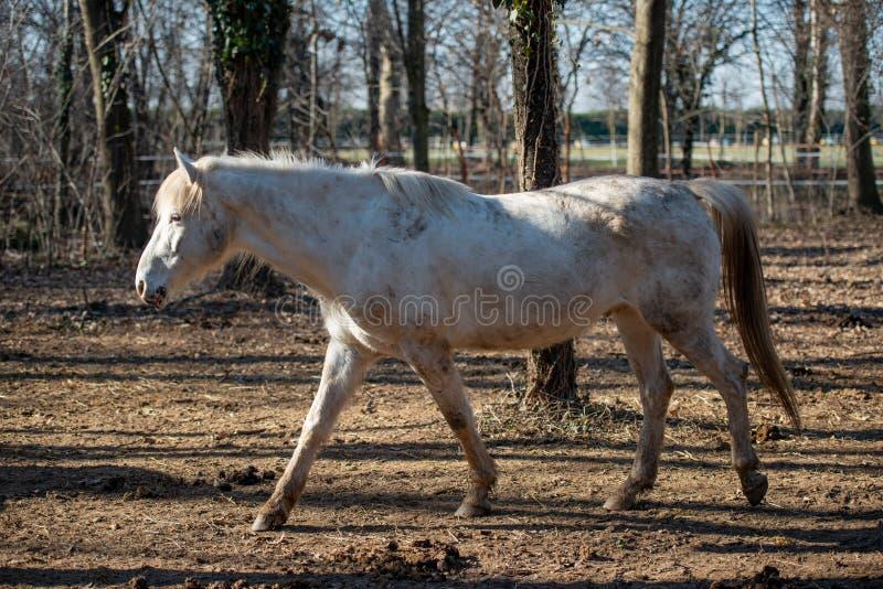 Horses run free. In the prairie stock photos