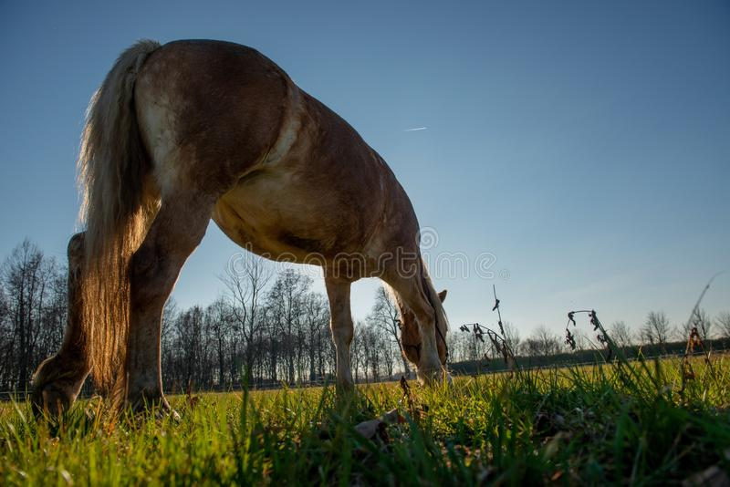 Horses run free. In the prairie royalty free stock photography