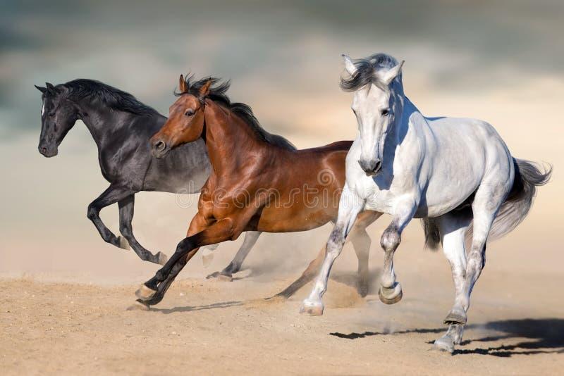 Horses run gallop. In desert against sky royalty free stock image