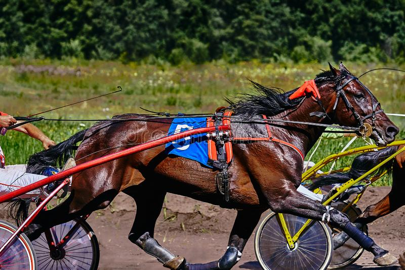 Horses run at high speed along the track of the racetrack. Competitions - horse racing royalty free stock image