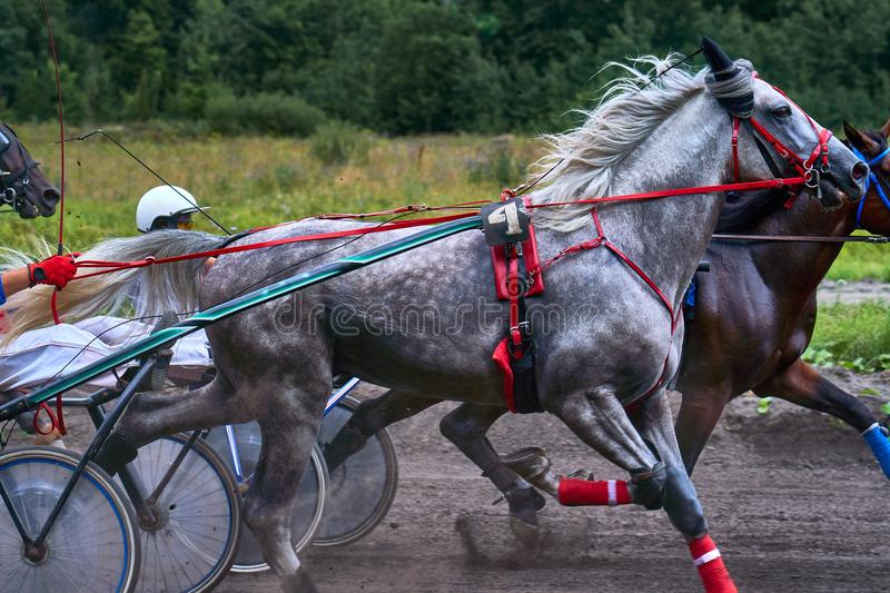 Horses run at high speed along the track of the racetrack. Competitions - horse racing.  stock image