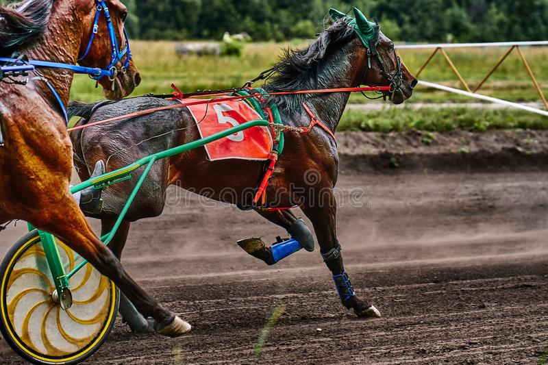 Horses run at high speed along the track of the racetrack. Competitions - horse racing royalty free stock photo