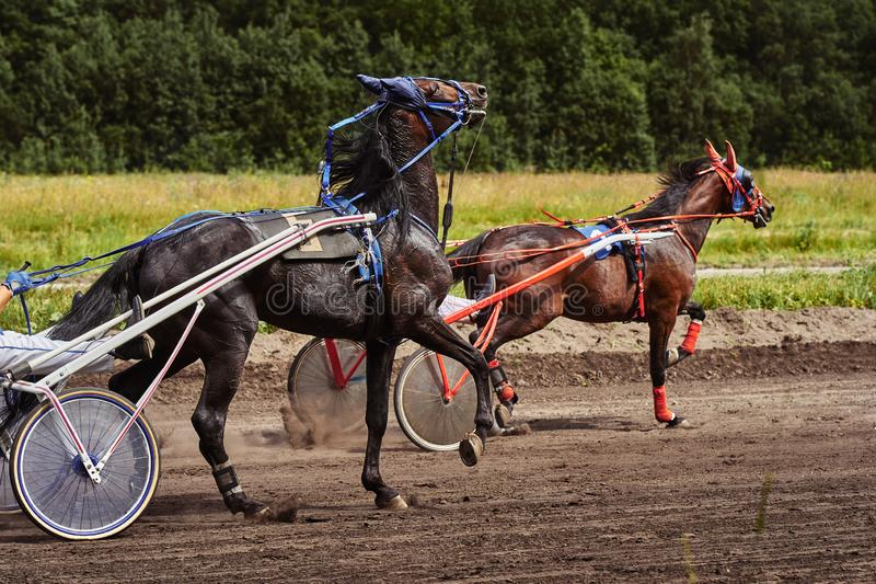 Horses run at high speed along the track of the racetrack. Competitions - horse racing royalty free stock images