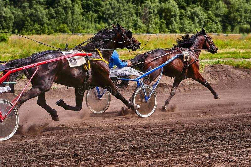 Horses run at high speed along the track of the racetrack. Competitions - horse racing royalty free stock photography