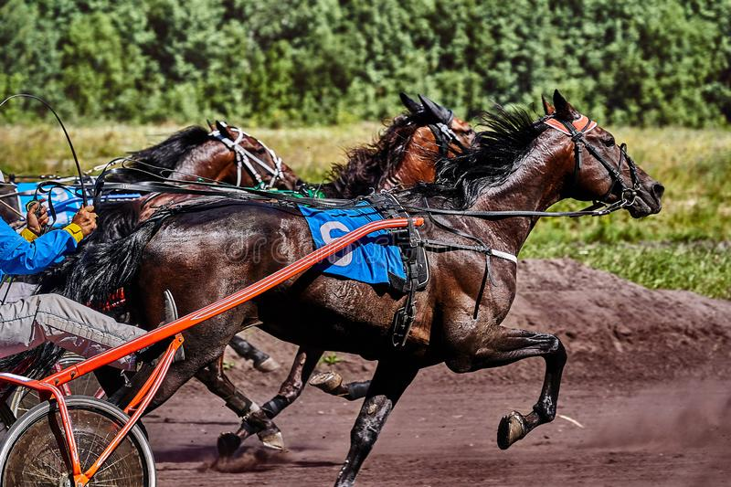 Horses run at high speed along the track of the racetrack. Competitions - horse racing stock photos