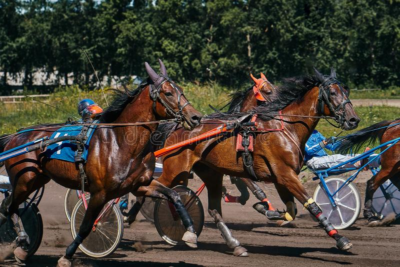 Horses run at high speed along the track of the racetrack. Competitions - horse racing royalty free stock photos