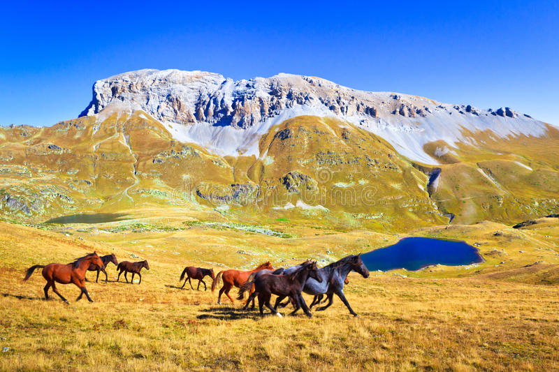 Horses run in a mountain valley stock image