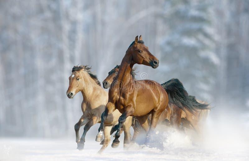 Horses run in a wild stock photo