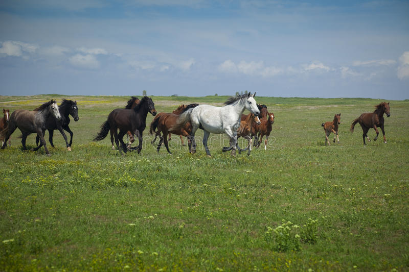 Download Horses Running Stock Photos - Image: 10336263