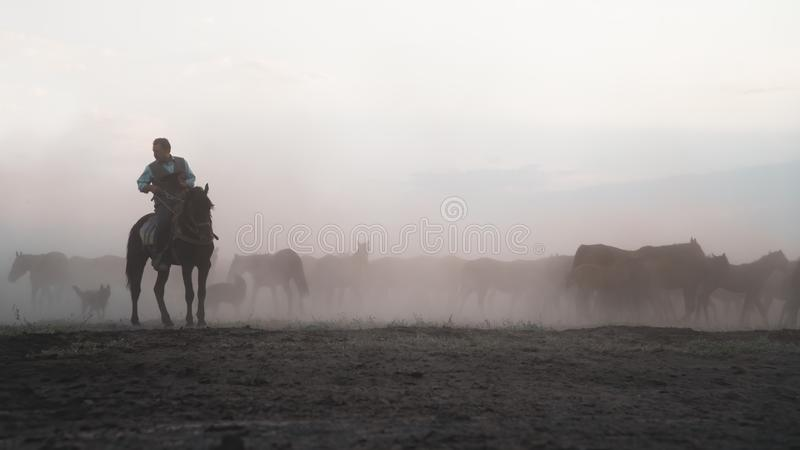 Horses running and kicking up dust. Yilki horses in Kayseri Turkey are wild horses with no owners. Kayseri, Turkey - November 2019: Horses running and kicking up royalty free stock photos