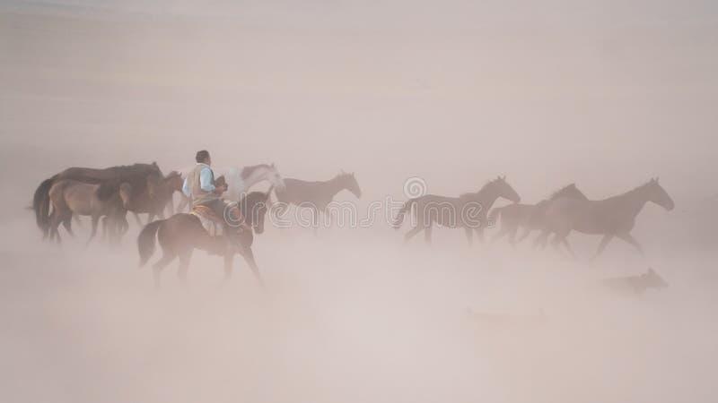Horses running and kicking up dust. Yilki horses in Kayseri Turkey are wild horses with no owners. Kayseri, Turkey - November 2019: Horses running and kicking up royalty free stock image
