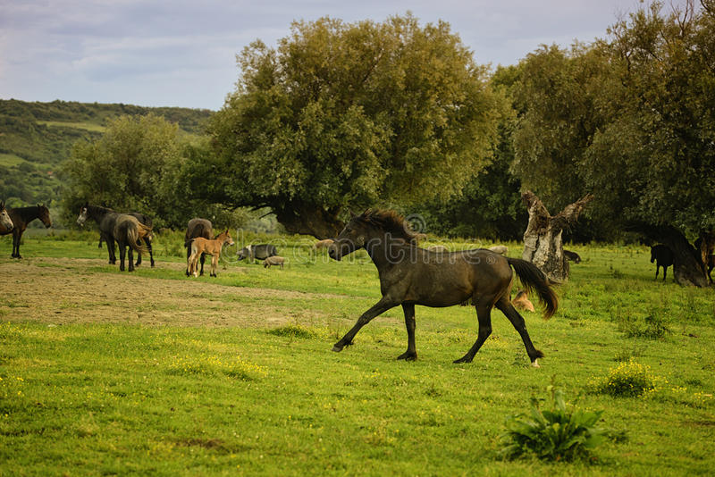 Horses Running. / summer meadow / nature royalty free stock photos