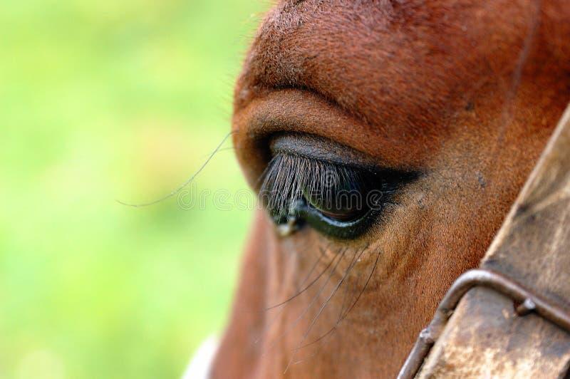 Download Horses's eye stock photo. Image of lash, animals, mammals - 4696186