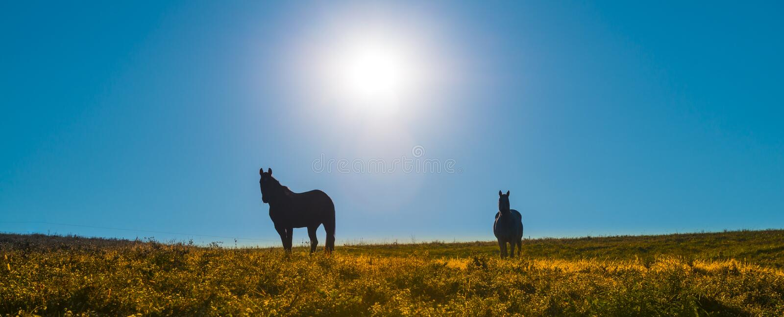 Horses Silhouette Against Sky stock photography