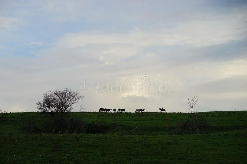 Horses silhouette on the meadow royalty free stock photos