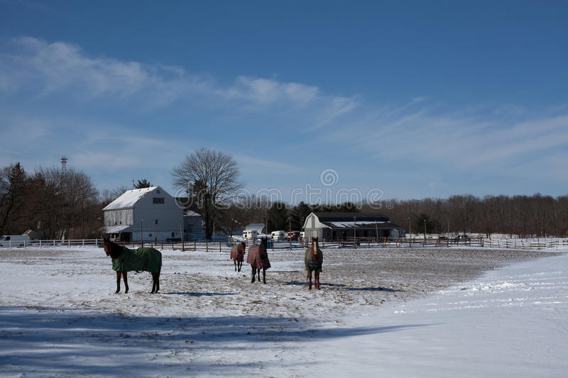 Horses on the snow royalty free stock photography