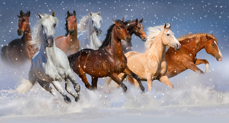 Horses in snow stock image